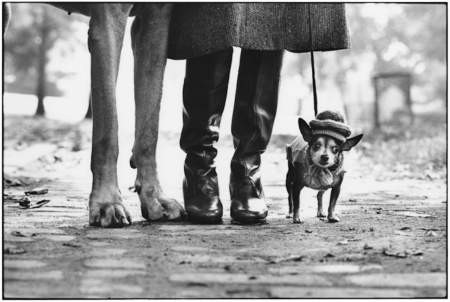elliott erwitt 1 Inspirational Street Photography Wallpapers by Elliott Erwitt