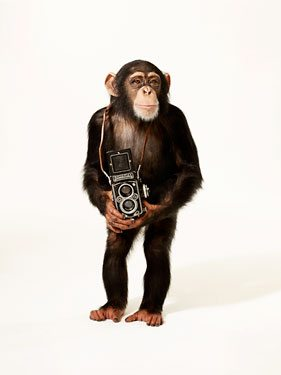 chimp camera rolleiflex 10 Reasons Why You Should Never Chimp While Shooting Street Photography