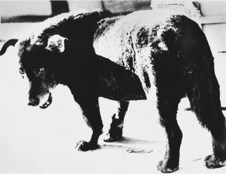daido moriyama 1971 stray dog 445b Why Street Photographers Need To Take Themselves More Seriously