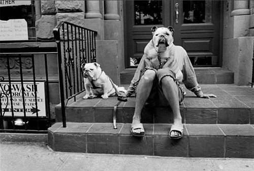 pitbull Why Street Photographers Need To Take Themselves More Seriously