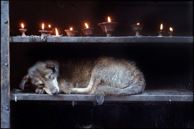 candle dog 670x446 When A Picture Is More Than Just A Picture: How to Organize Your Own Charity Photography Auction