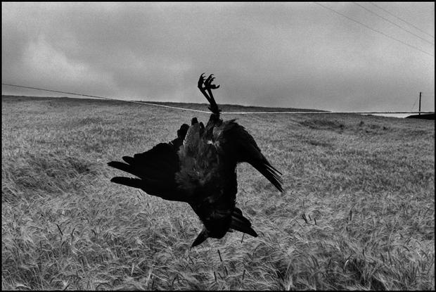 IRELAND. 1978. © Josef Koudelka / Magnum Photos