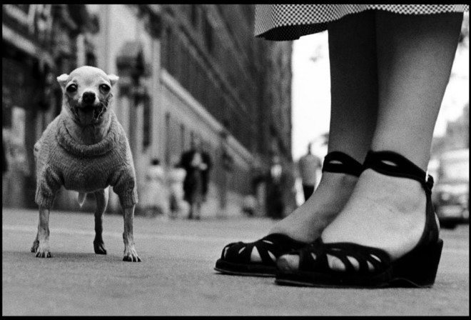 PAR42295 660x448 25 Practical Tips from Elliott Erwitt for Street Photographers